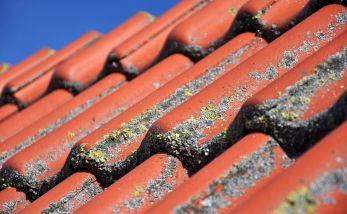 roof-1559814_1920.jpg